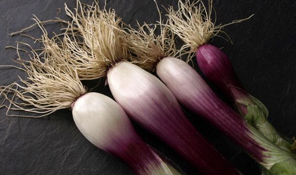 Cebolleta morada